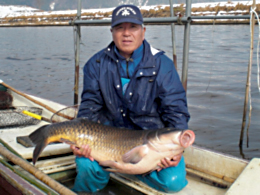 たたき網漁で捕獲されたコイ