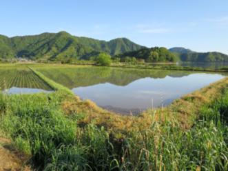 湖とつながる水田